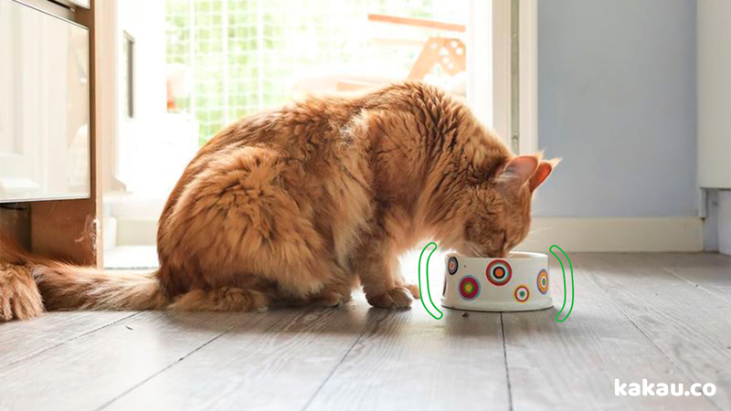 kakau, seguros, animal de estimação, cachorro, gato, casa, lar, apartamento